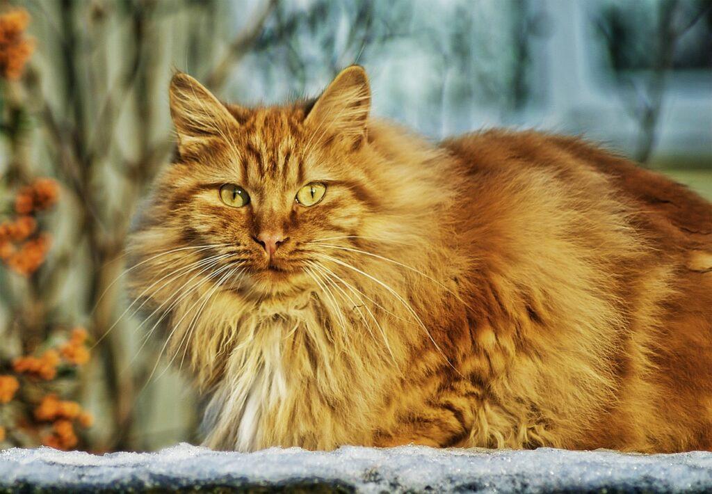 obroża na kleszcze dla kotów